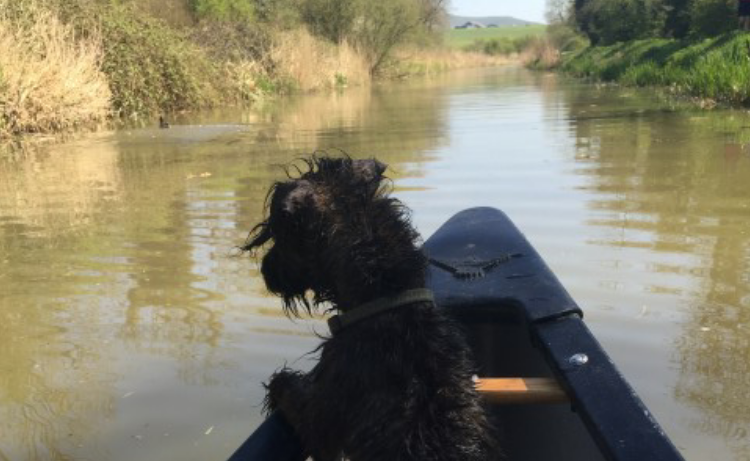 Clumsy Puppy + Canoe = Potential Disaster!