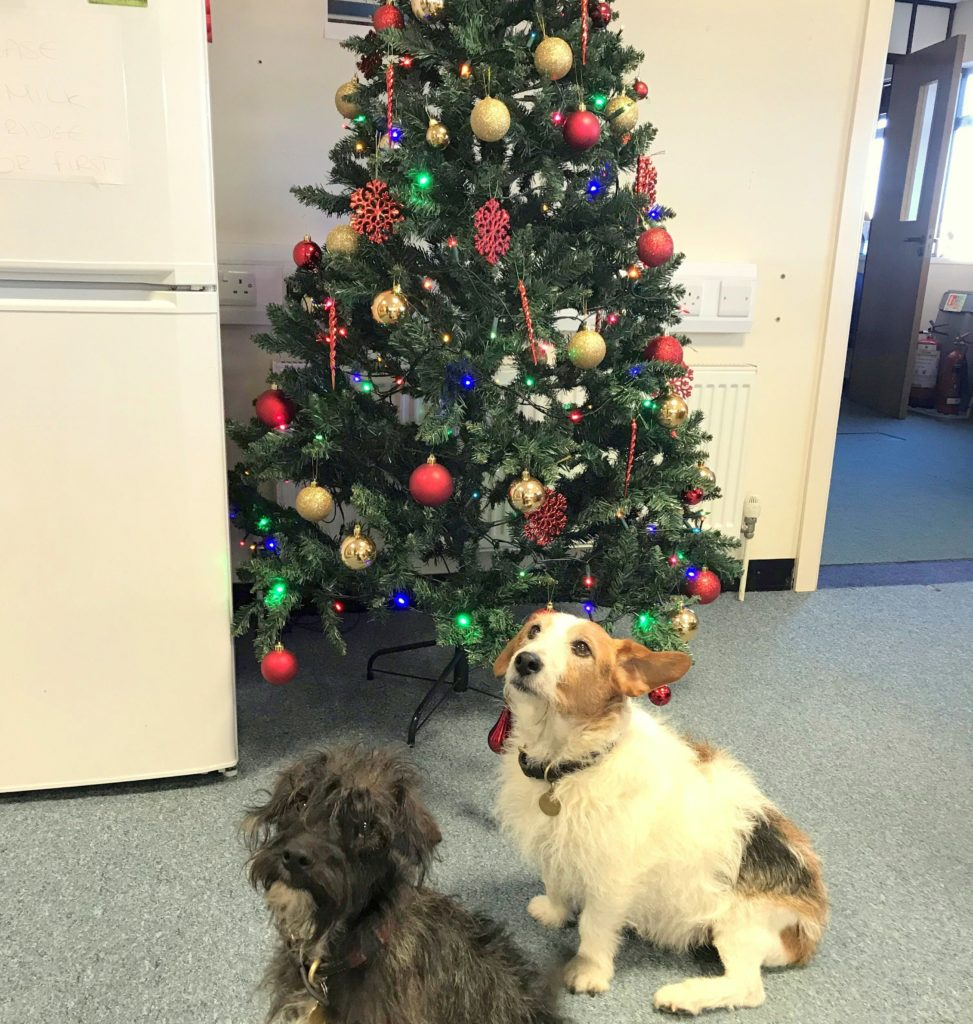 Christmas Has Arrived In The Office!